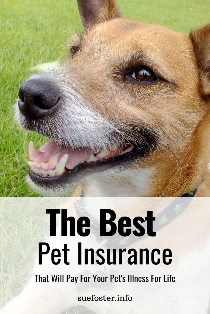 The best pet insurance that will pay for your pet's illness for life