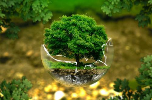 Start An Eco-Friendly Business