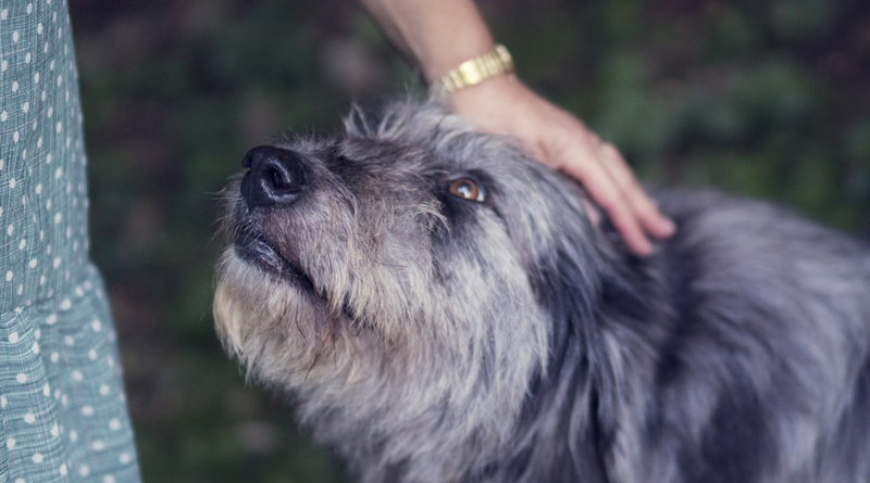 Cutting the Cost of Pet Ownership