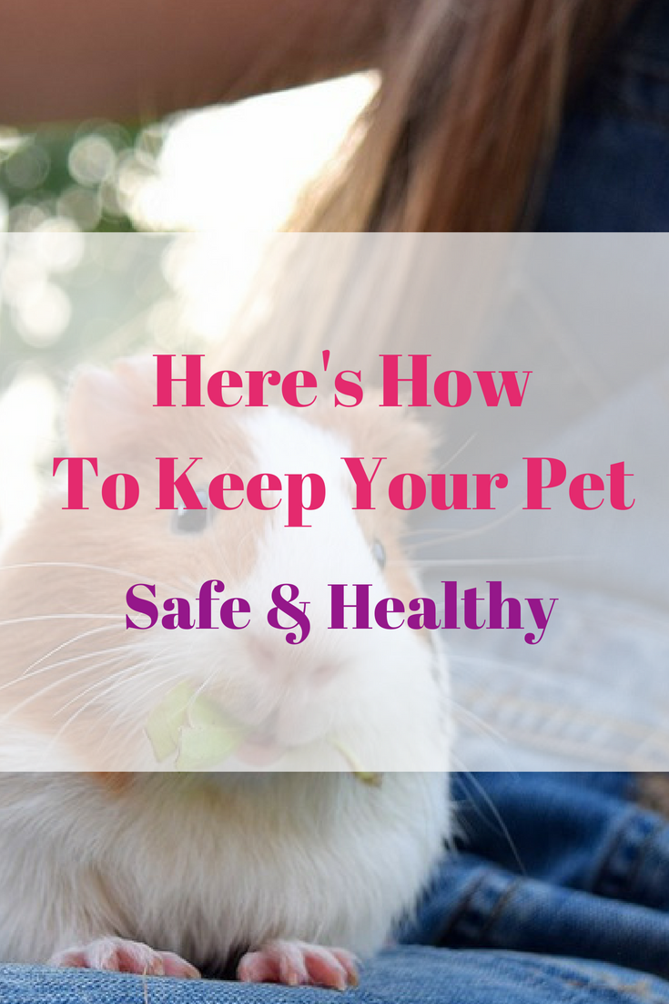 ATTACHMENT DETAILS Here's How to Keep Your Pet Safe & Healthy