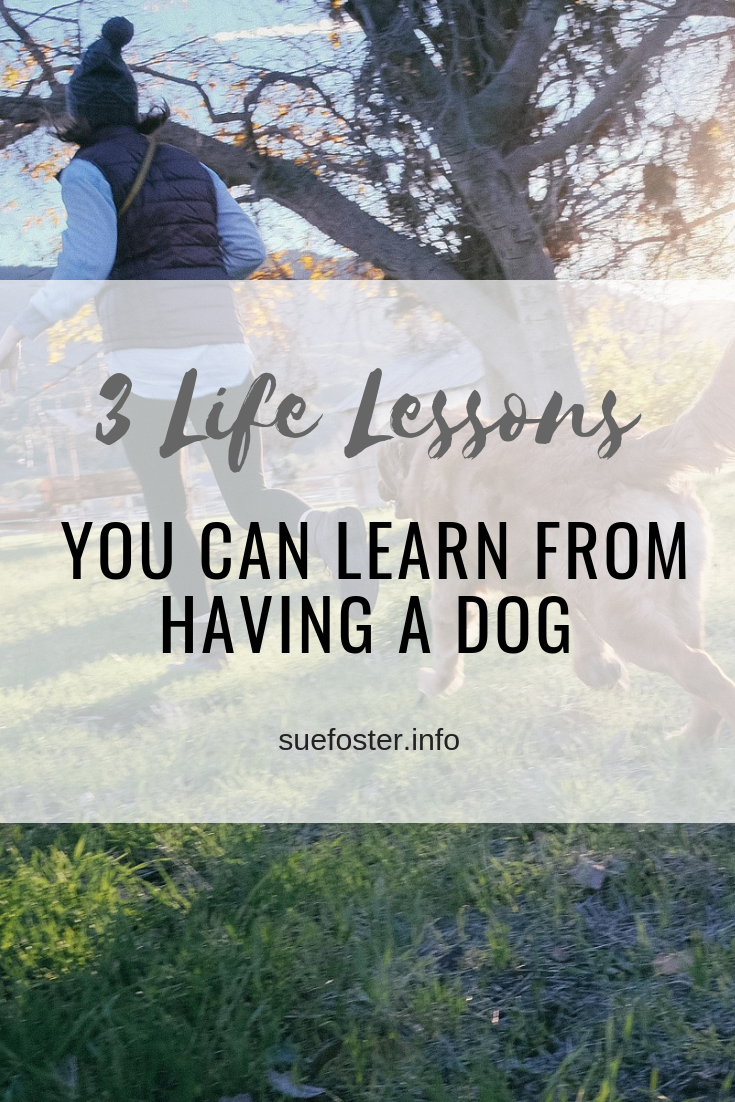 3 Life Lessons You Can Learn from Having a Dog