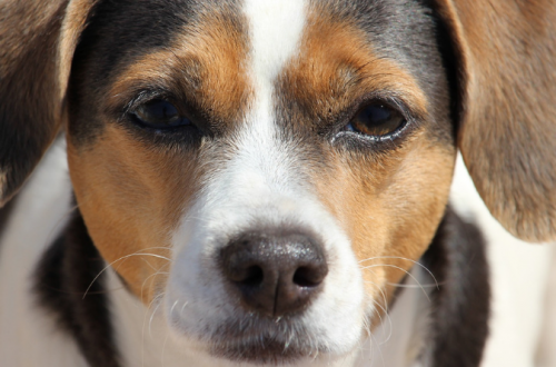 4 Areas Pet Insurance Should Cover