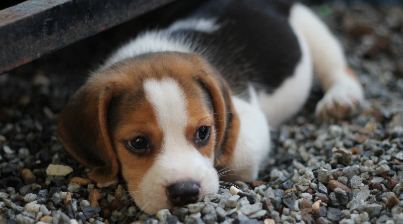 Preparing Your Household For A New Puppy