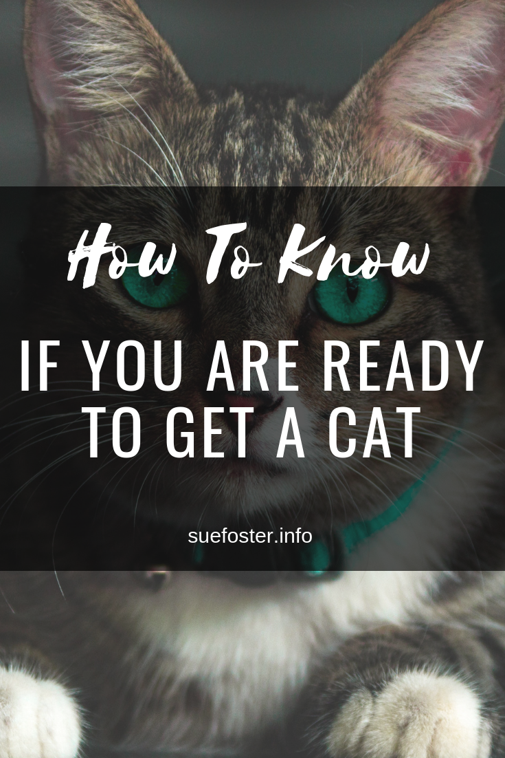 if you are Ready to Get a Cat