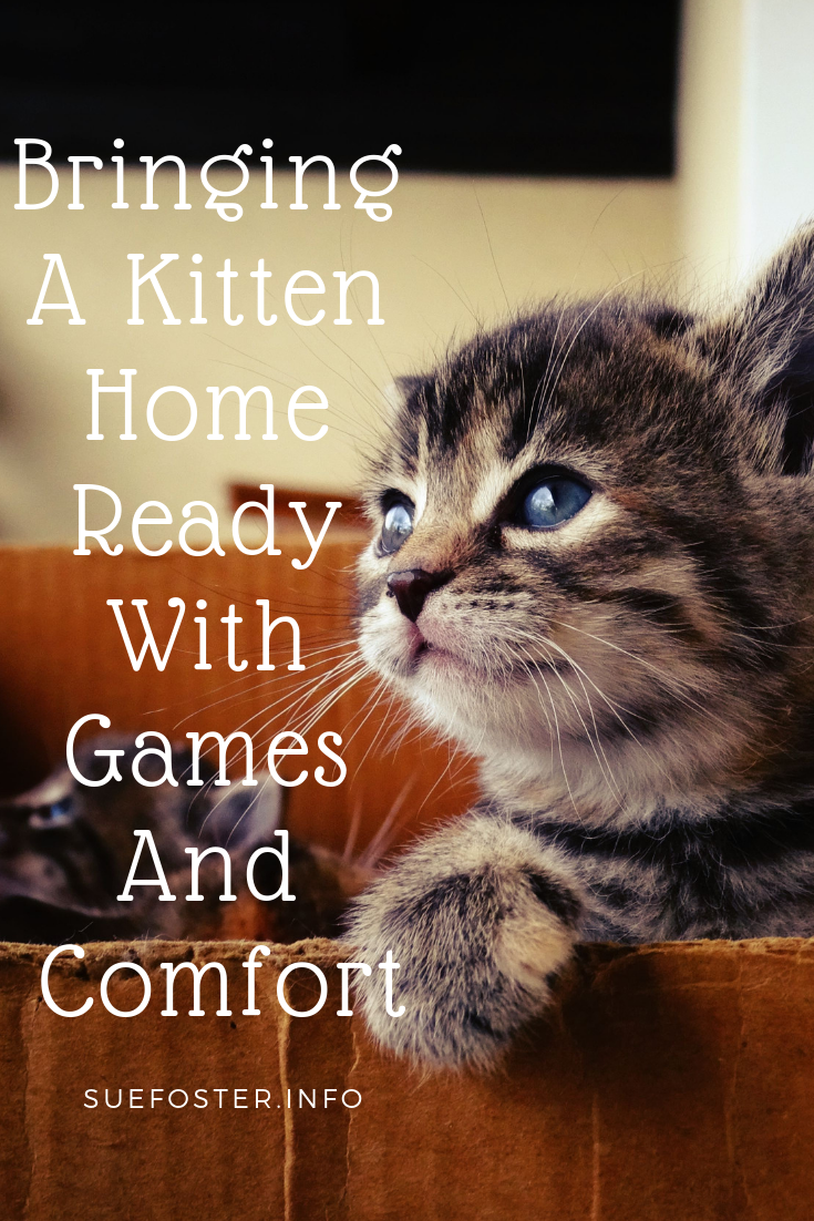 Bringing A Kitten Home Ready With Games And Comfort