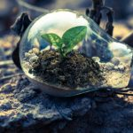 How You Can Become More Environmentally Friendly As A Business