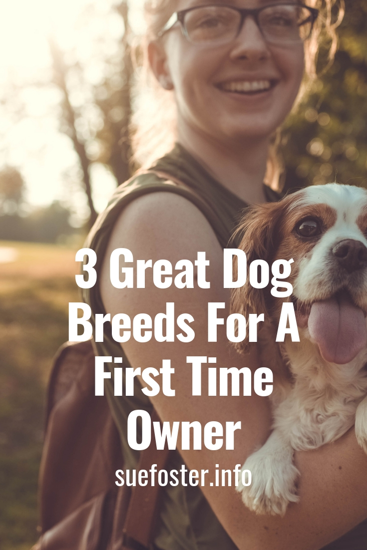 3 Great Dog Breeds For A First Time Owner
