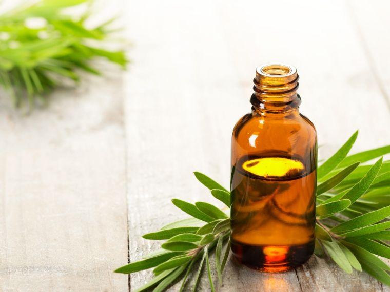 10 Useful Tea Tree Oil Blend Recipes