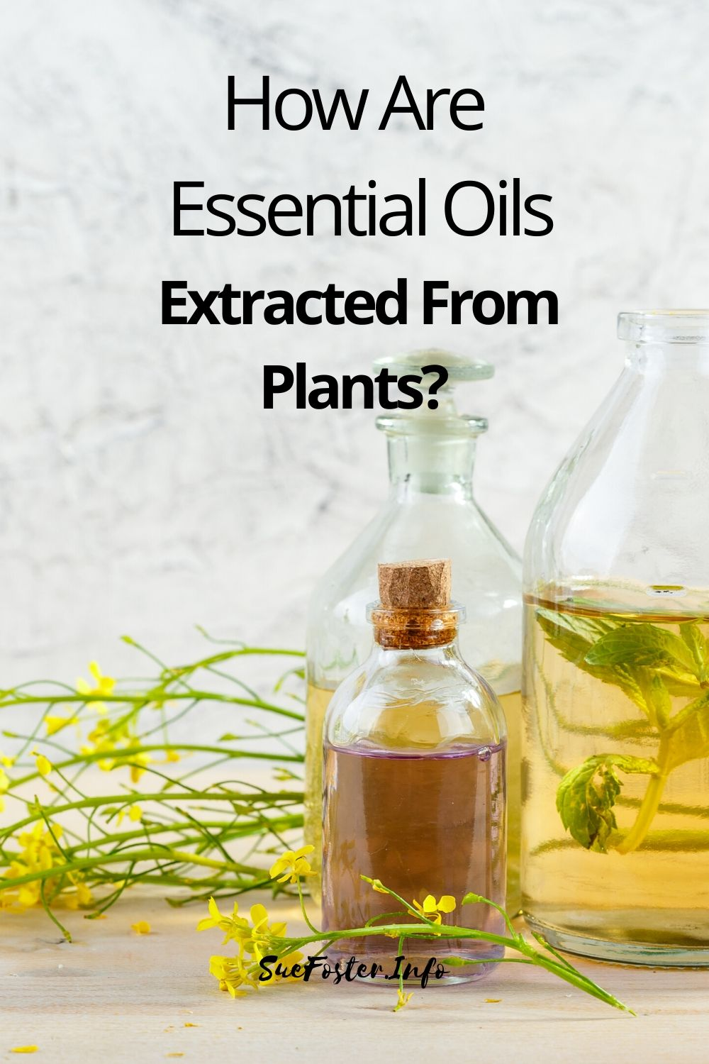 How Are Essential Oils Extracted From Plants? Find out the most common methods of essential oil extraction.