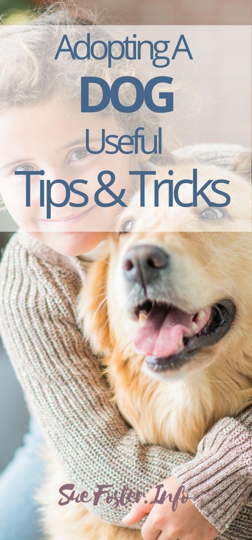 Adopting a dog, useful tips and tricks.