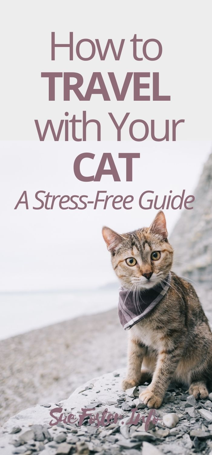Tips on how to make travelling with your cat as stress-free as possible.
