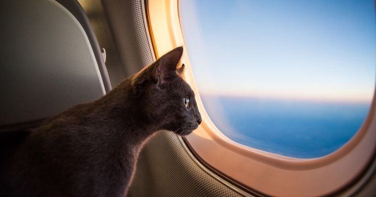 How‌ ‌to‌ ‌Travel‌ ‌with‌ ‌Your‌ ‌Cat:‌ ‌A‌ ‌Stress-Free‌ ‌Guide‌