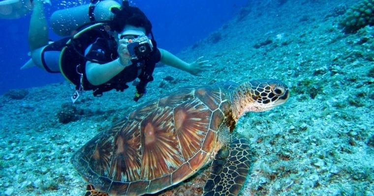 Person scuba diving, taking a photo of a turtle.