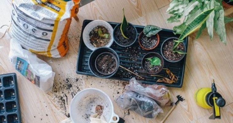 Potting seeds.